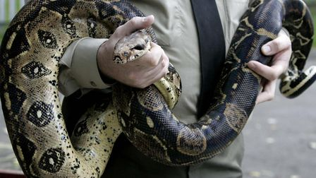 A boa constrictor snake stock image (Picture Phil Noble/PA)