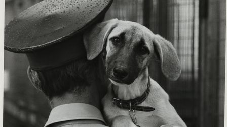 Battersea Dogs Home history spread. Picture: Battersea Dogs & Cats Home
