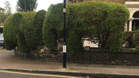 Topiary Elephant at the junction of Ambler Road and Romilly Road could be cut down. Picture: Lucas C