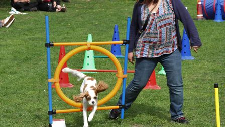 Bianca and her dog Honey competing in the agility race at last year's Dog Olympix. Picture: Ron Vest