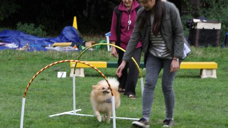 Contestants at last year's Dog Olympix. Picture: Ron Vester