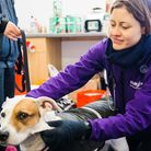 Mayhew has joined forces with Crisis to support homeless people with pets. Picture: Mayhew