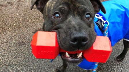 Marley. Picture: RSPCA