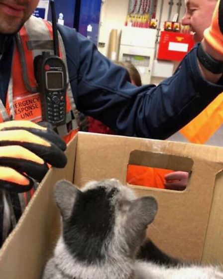 Blitz the cat was rescued after 7 hours in an underground tunnel. Picture: TfL