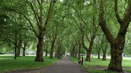 Highbury Fields. Picture:Ken Mears