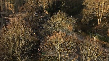 A photograph taken from the seventh floor of Dixon Clark Court of trees scheduled to be felled March