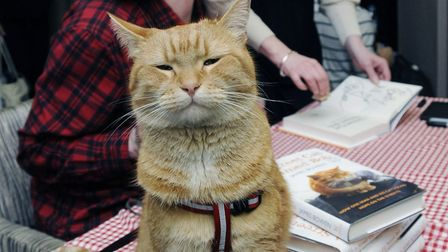 James Bowen with Bob the Cat at a book-signing at Waterstones in Islington Green. Picture: Dieter Pe