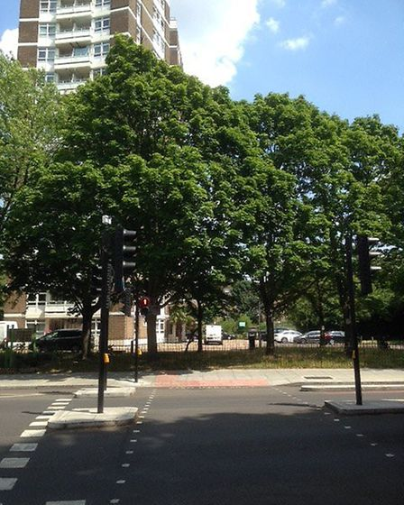 Mature trees are due to be felled as part of the Dixon Clark Court development. Picture: Julian Scot