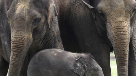 Elephants will soon be heading to Wraxall to take up residence in their new home at Noah's Ark Zoo F