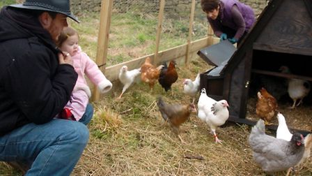 Volunteers with chickens and Kara Harrison and dad Sam.