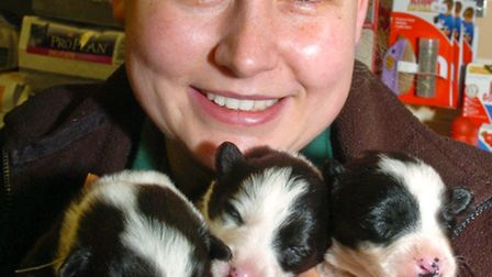 Michelle Cox with Collie puppies.