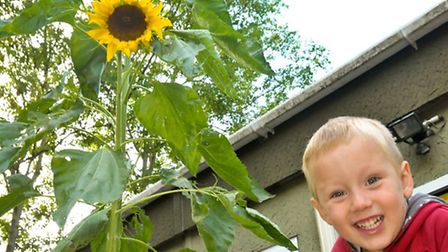 Green fingered Ben who grew a giant sunflower with friends Cara, Meili and Isla.