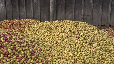 Apples ready to be pressed. (Getty Images/iStockphoto)