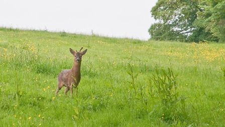 See what wildlife you can spot during any of our Top 5 walks in Somerset.