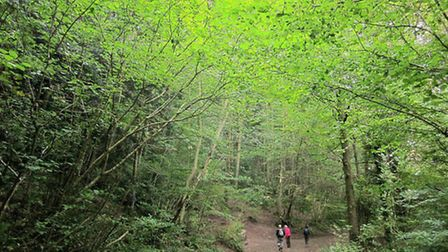 Leigh Woods (Track, Leigh Woods for ST5474 Copyright Derek Harper and licensed for reuse under CC B