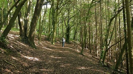 Clevedon Court Woods. (Woods on Court Hill for ST4171 © Copyright Anthony O'Neil and licensed for re