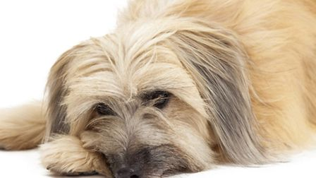 Does your dog need energising? Take him on one of these popular walks.
