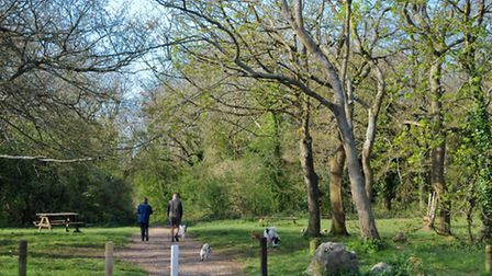 Weston Woods is a great place to escape the sun.