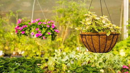 Hanging baskets are always popular