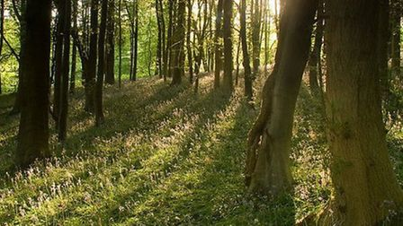 Leigh Woods (Bluebells in Leigh Woods near Clifton © Graham Duerden, Flickr licensed under CC BY-NC-