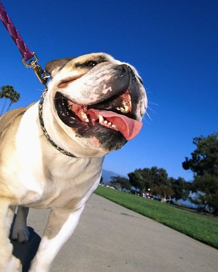 Let your dog off the lead on these dog-friendly walks.