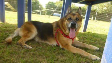 Ruby has now recovered – and is looking for a new home.