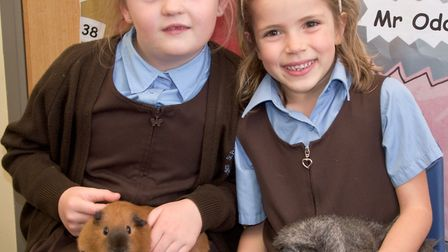 St Francis School, pupils with some guinea pigs.