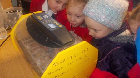 All Saints Primary School students watching eggs hatch.