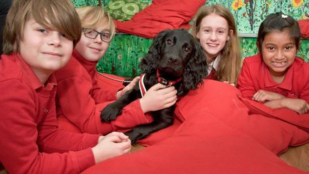 Yeo Moor Primary School. Pupils pictured with Loki, the new school dog.