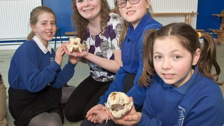 Bristol University students with pupils, looking at animal skulls and teeth to learn about there die