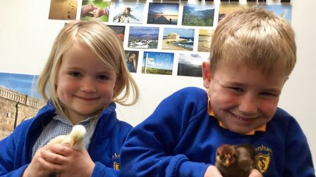 Youngsters with the baby chicks. Picture: Shane Dean