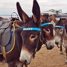 Lovely to see the donkeys on the beach, pleasing so many youngsters. Picture: Terry Kelly