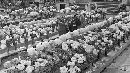 Weston and District Chrysanthemum Society Show at the Winter Gardens Pavilion. Picture: WESTON M