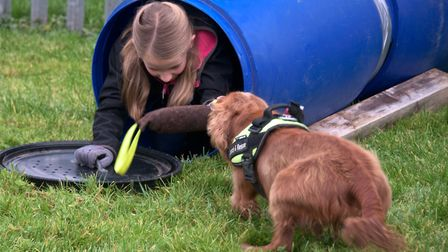 Weston Fire Station Open Day. USAR rescue dogs demo. Picture: MARK ATHERTON