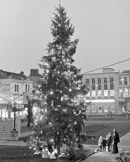 Christmas Trees in Weston's shoping areas, including Dolphin Square, Weston High Street at the Itali
