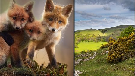 Support for a campaign to ban trail hunting in the Mendips has skyrocketed.