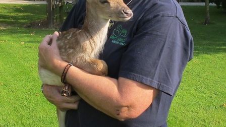 Secret World Wildlife Rescue is opposing a ban on the release of non-indigenous species which is set