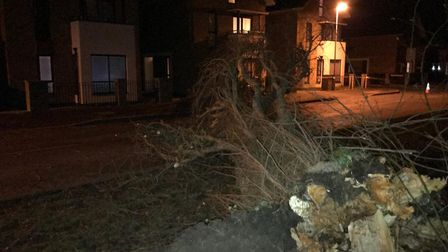 The fallen tree. Picture: Sam Frost