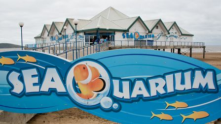 Weston's SeaQuarium will close with immediate effect. Picture: MARK ATHERTON