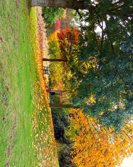 Colours in Ashcombe park