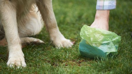 Dog owners have been urged to always pick up after their pet.
