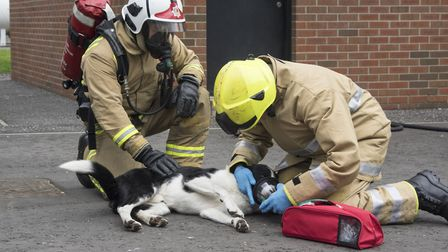 A couple from Weston have launched a campaign to equip all fire engines with pet oxygen masks.