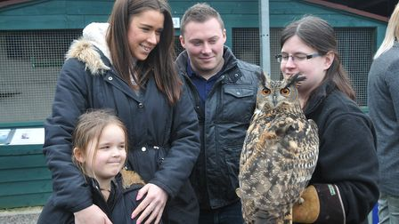 Basil the European Eagle Owl. Picture: Jeremy Long