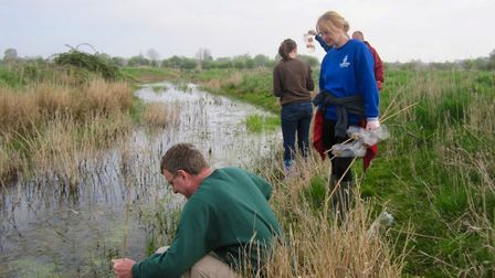 YACWAG members looking for newts in a super ditch.Picture: YACWAG