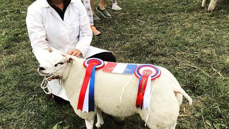 Harriet Tibbs and her prize-winning sheep.Picture: Little Orchard Beltex