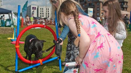 Evie Darcey and Kirsty teaching Doris some new tricks in the obstacle course. Picture: MARK ATHER