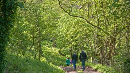 Visitors enjoying Hay Wood Bluebell Open Weekend at Hay Wood Logging Co in Hutton. Picture: MARK