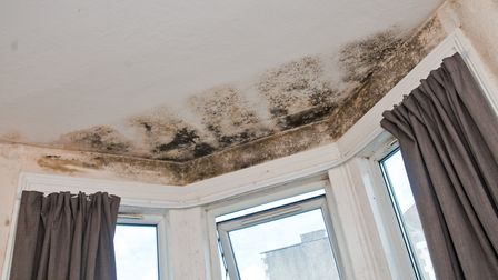 Mould covers the walls of Tanyas Weston flat. Picture: MARK ATHERTON