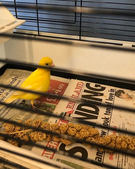 The bird is now staying in Brent Knoll until its owners come forward. Picture: RSPCA