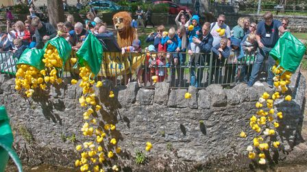 The start of Cheddar Lions duck race. Picture: MARK ATHERTON